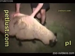 Man with naughty desires gets fuckking with a sheep