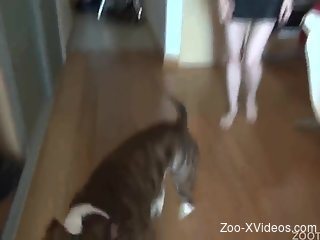 Amateur cam porn with chick using dog for sexual pleasures