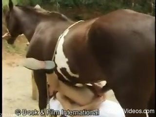 Rough home zoophilia with a horse and a tight babe