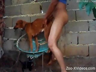 Small and cute brown dog banged from behind