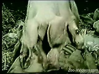 Vintage animality sex movie with farm animals and dogs