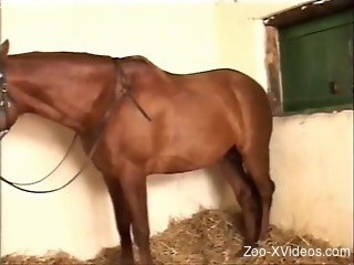 Busty female sensually plays with a brown mare
