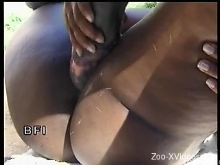 Sexy slutty ebony blows a truly huge stallion cock
