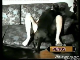 Tight bitches on cam while having animal sex