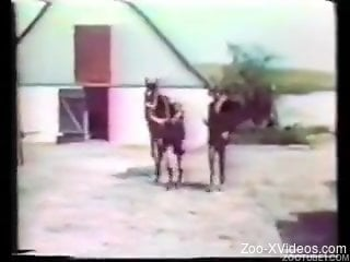 Awesome vintage animality XXX with hot girls and their trained...
