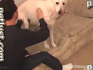 Sensual white dog nicely fucked in the ass by zoophile