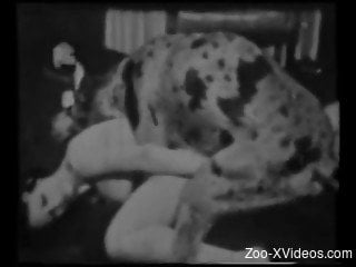 Impressive vintage bestiality porn with a Dalmatian and brunette