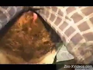 Serious scenes of animal porn caught on cam in close details