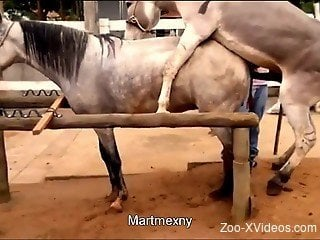 Two amazing sexy horses have passionate sex in doggy style pose