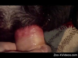 Watch how my hard loaded dick penetrates anus of an animal