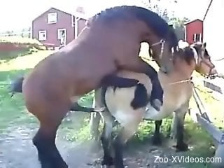 Two twisted ponies enjoy a hardcore romp outdoors