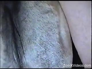 Dude with a throbbing cock fuck-punishing a horny horse