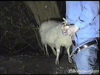 Horny farmer finds a sheep to face-fuck on camera