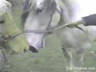 Hardcore fucking featuring two horny brown horses