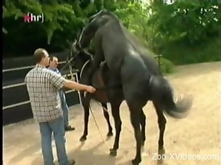 Two black horses enjoying hardcore fucking outdoors