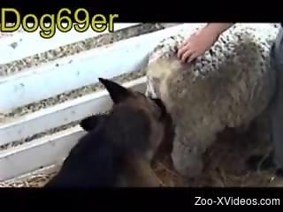 Dirty animal porn with sheeps for real zoophilia lovers