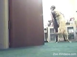 furry dog sticks cock in woman's tight ass
