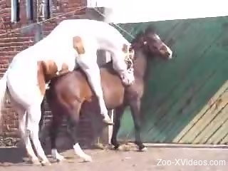 Stallion fucks female horse and zoo porn love films it