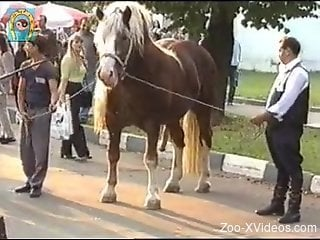 Horse show makes zoo porn lover to crave for sex
