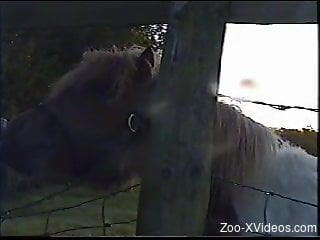 Horse is filmed by a really perverted zoophile