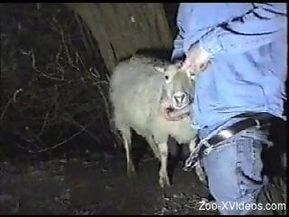 Brazen zoophile eagerly fucking a sheep's throat