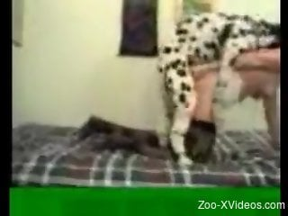 Retro spy cam video focusing on hard bestiality sex