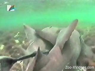 Sexy sea creatures enjoying banging underwater