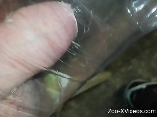 Man loves the feel when the insects pinch his dick