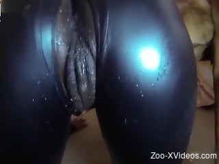 Catsuit cutie worships dog cock and gets fucked