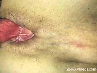 Passionate anal fucking with an experienced zoophile