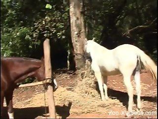Smoldering Latina submits to a stallion's hard cock