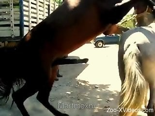 Brown stallion fucks a white mare's hot pussy