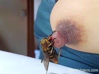 Busty woman loves a little bee on her hard nipple