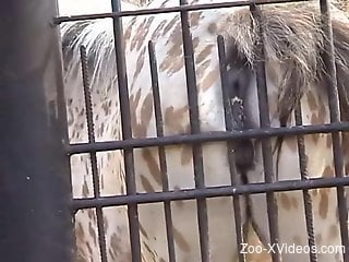 Mare rubbing its greedy cunt against the steel cage