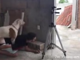 Gay male fucked by the dog when posing on cam