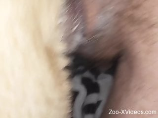 Closeup sex with a furry animal in scenes of anal sex