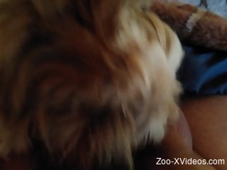 Dude is happy to get his cock licked by a kinky dog