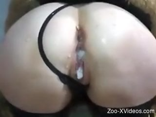 Pig's strange cock ruins a blonde zoophile's hole