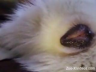Sexy animal pussy getting finger-popped big time