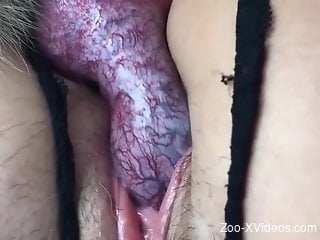 Juicy pussies getting dicked deep and hard up close