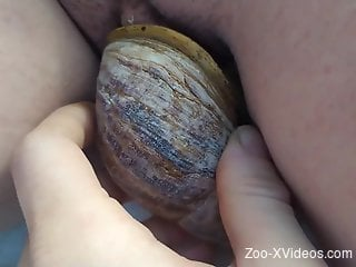 Sexy snail pleasuring a zoophile's hot pussy
