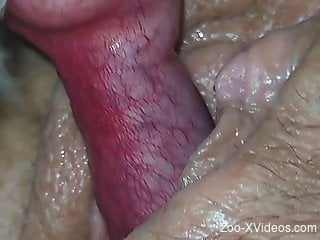 Veiny dog penis gets to fuck a juicy zoophile  hole